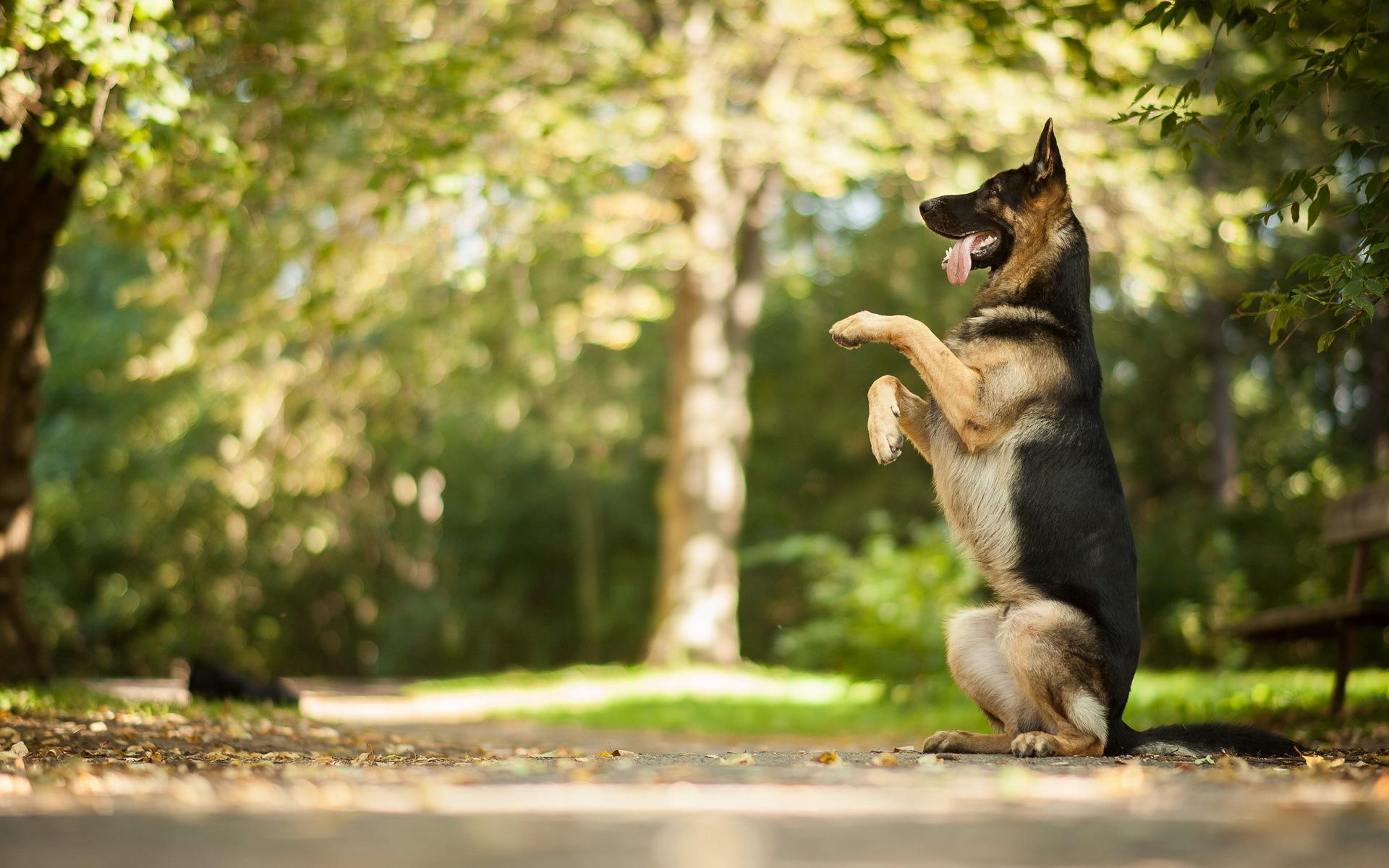 Спортивно-служебные собаки