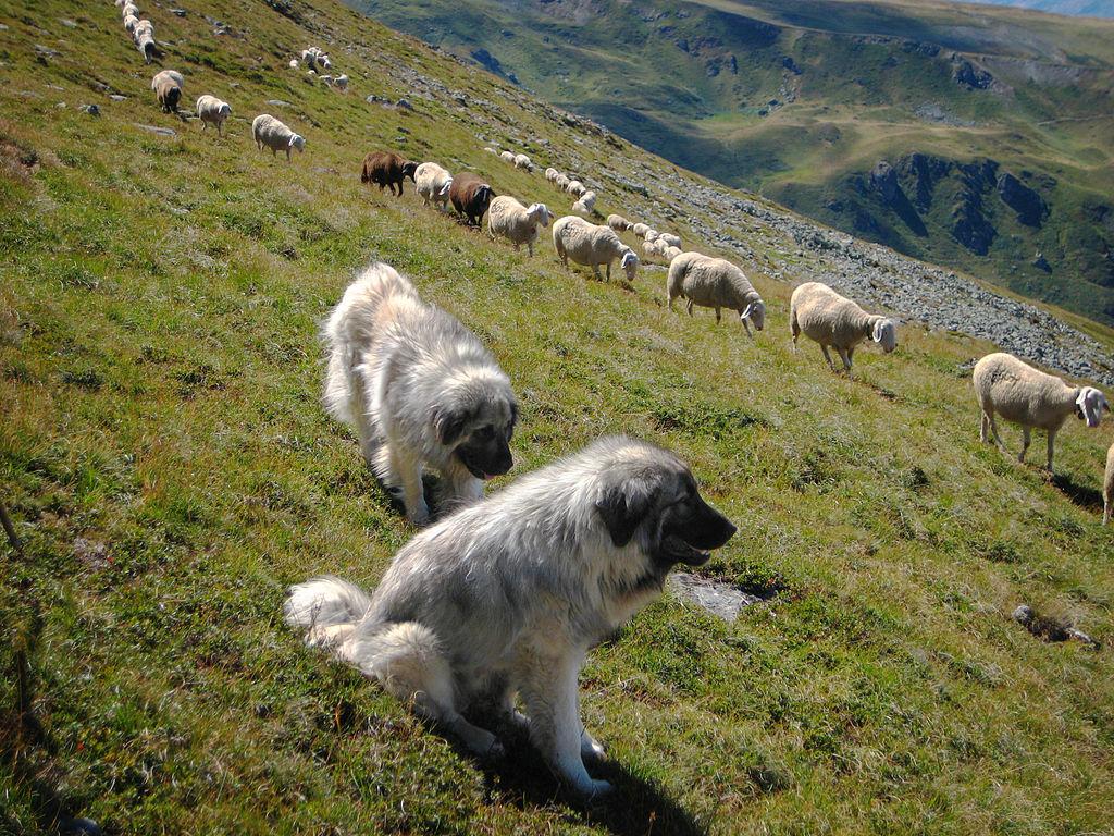 Виды служебных собак