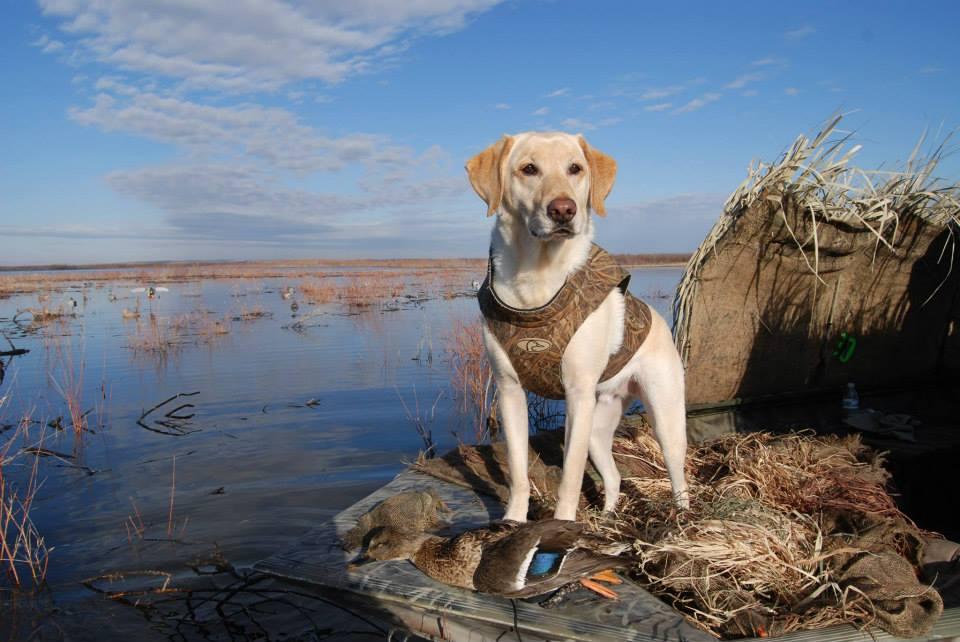 Охотничьи породы собак: характеристика