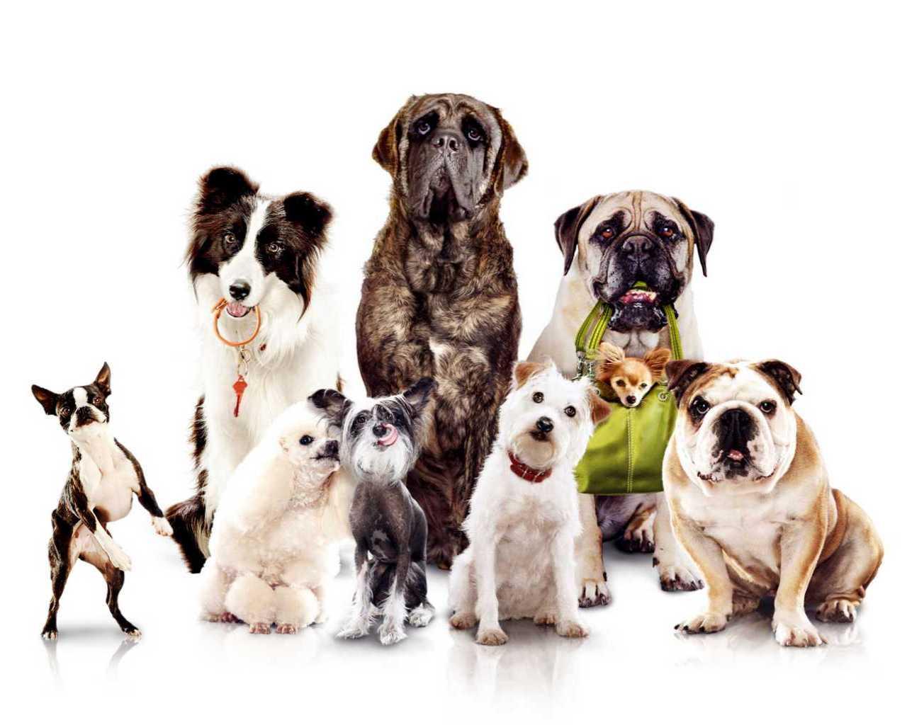 Какие бывают собаки по применению?