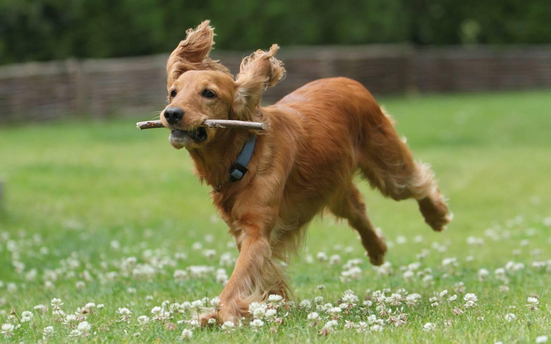 Средние собаки: какие это?