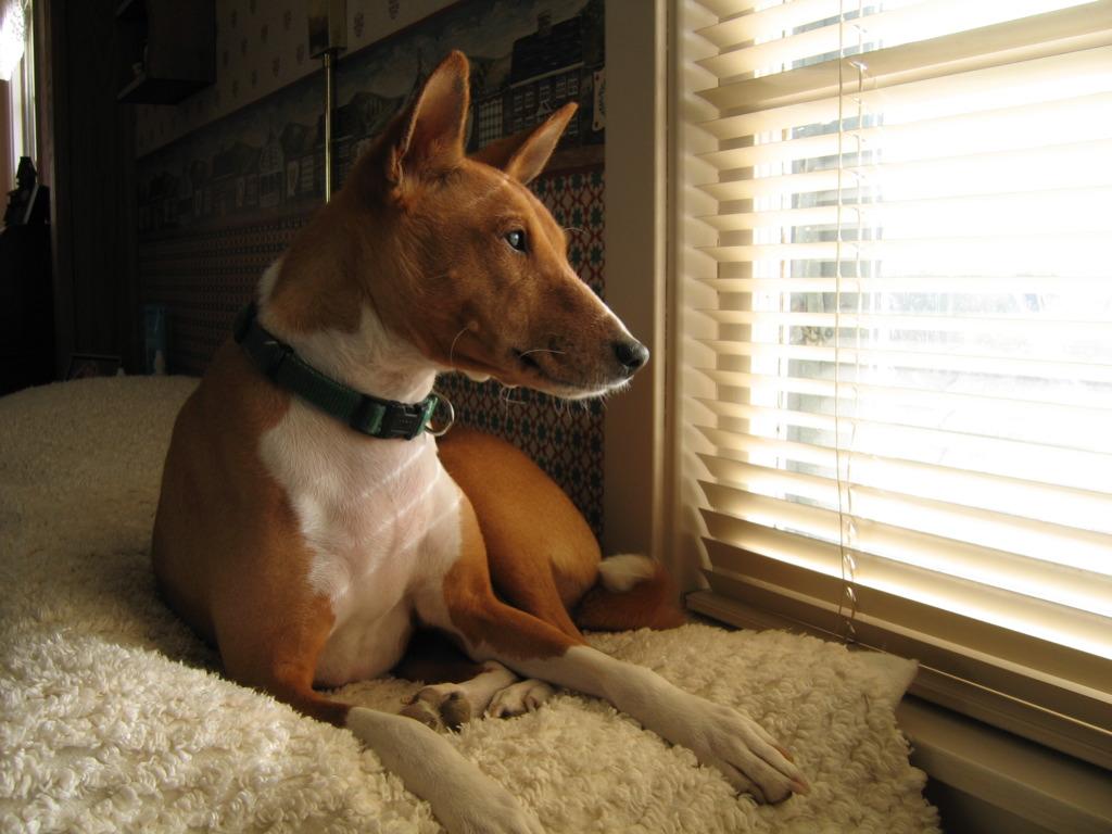 Как ухаживать за нелающей собакой?