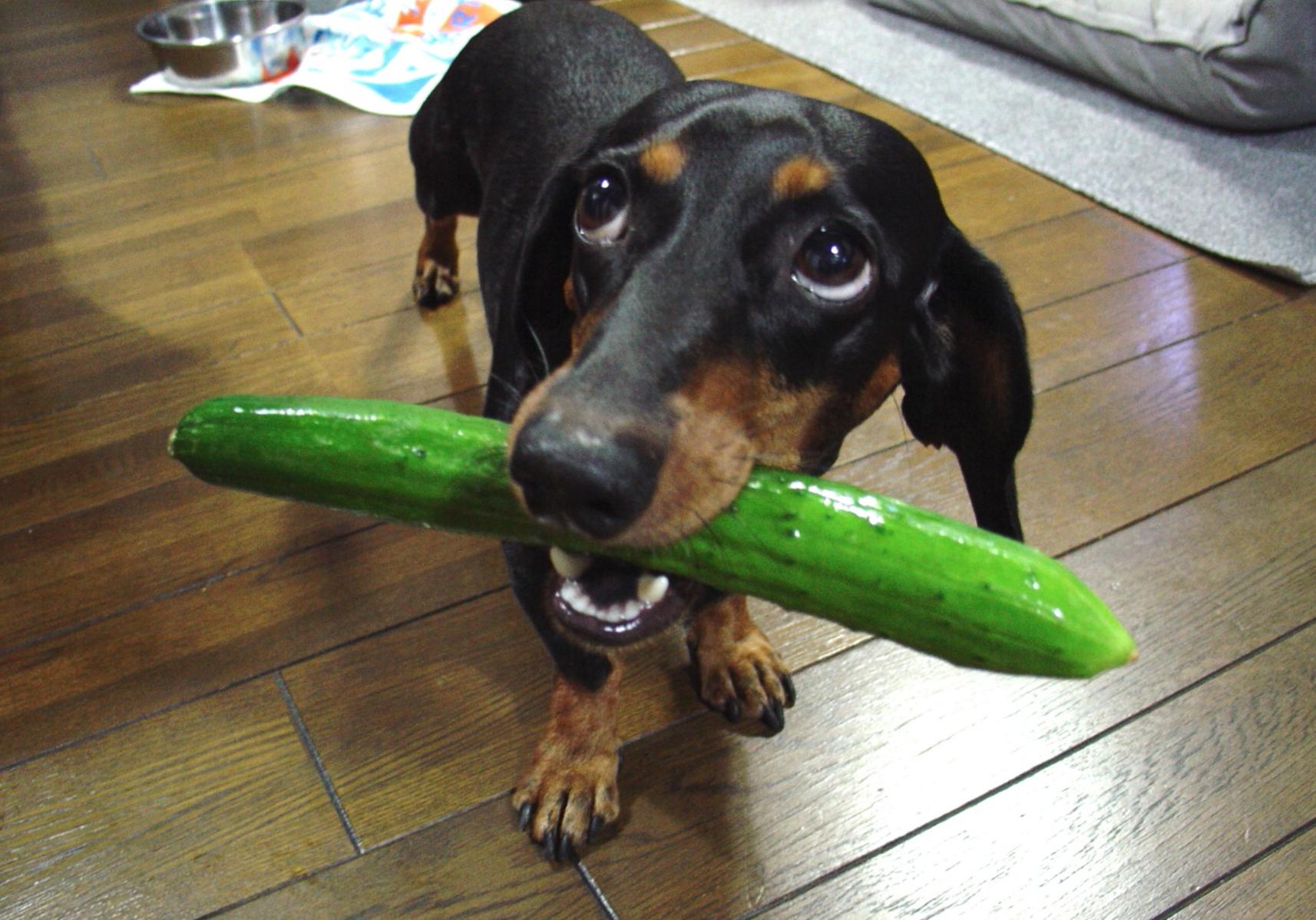 Натуральное кормление собак