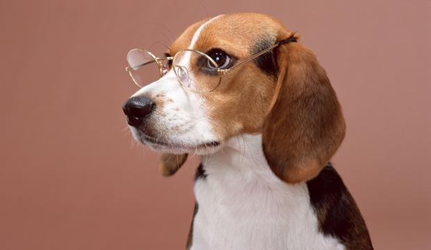 Как выбрать кличку для собаки? Советы кинологов