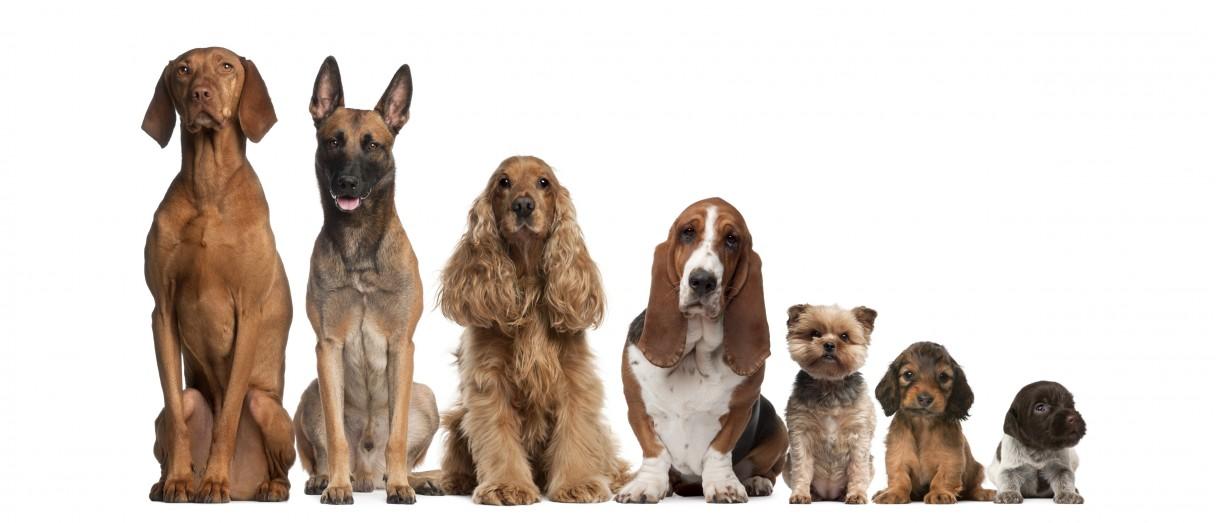 Как можно назвать собаку? Правильно выбираем кличку для щенка