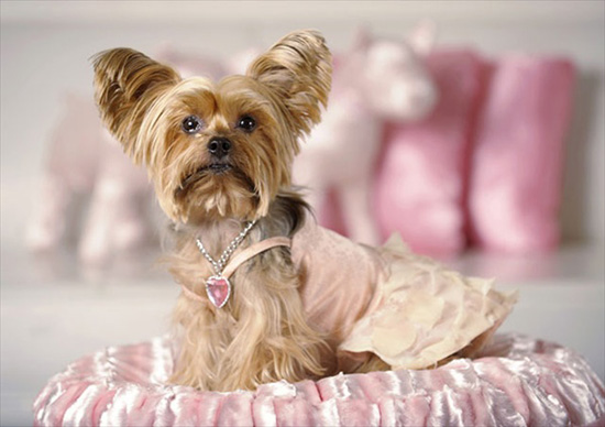 Как назвать собаку девочку?
