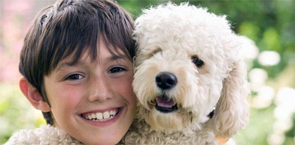 Гипоаллергенные породы собак: выбор собаки для аллергика