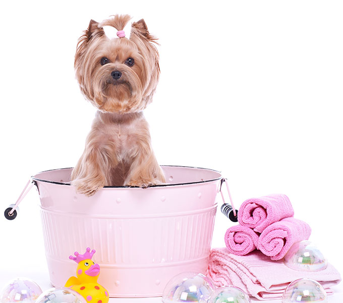 Груминг собак: что это такое и зачем нужен питомцу
