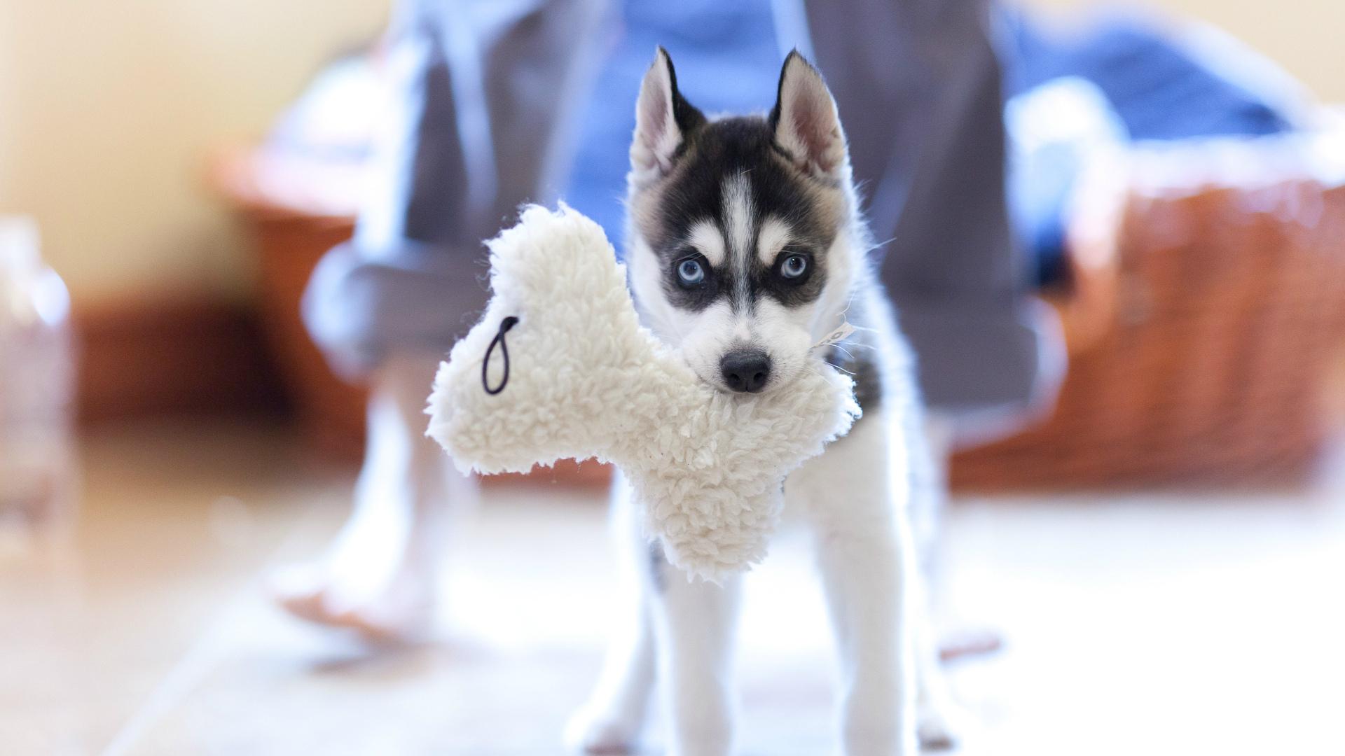 Зачем нужны игрушки для собак?