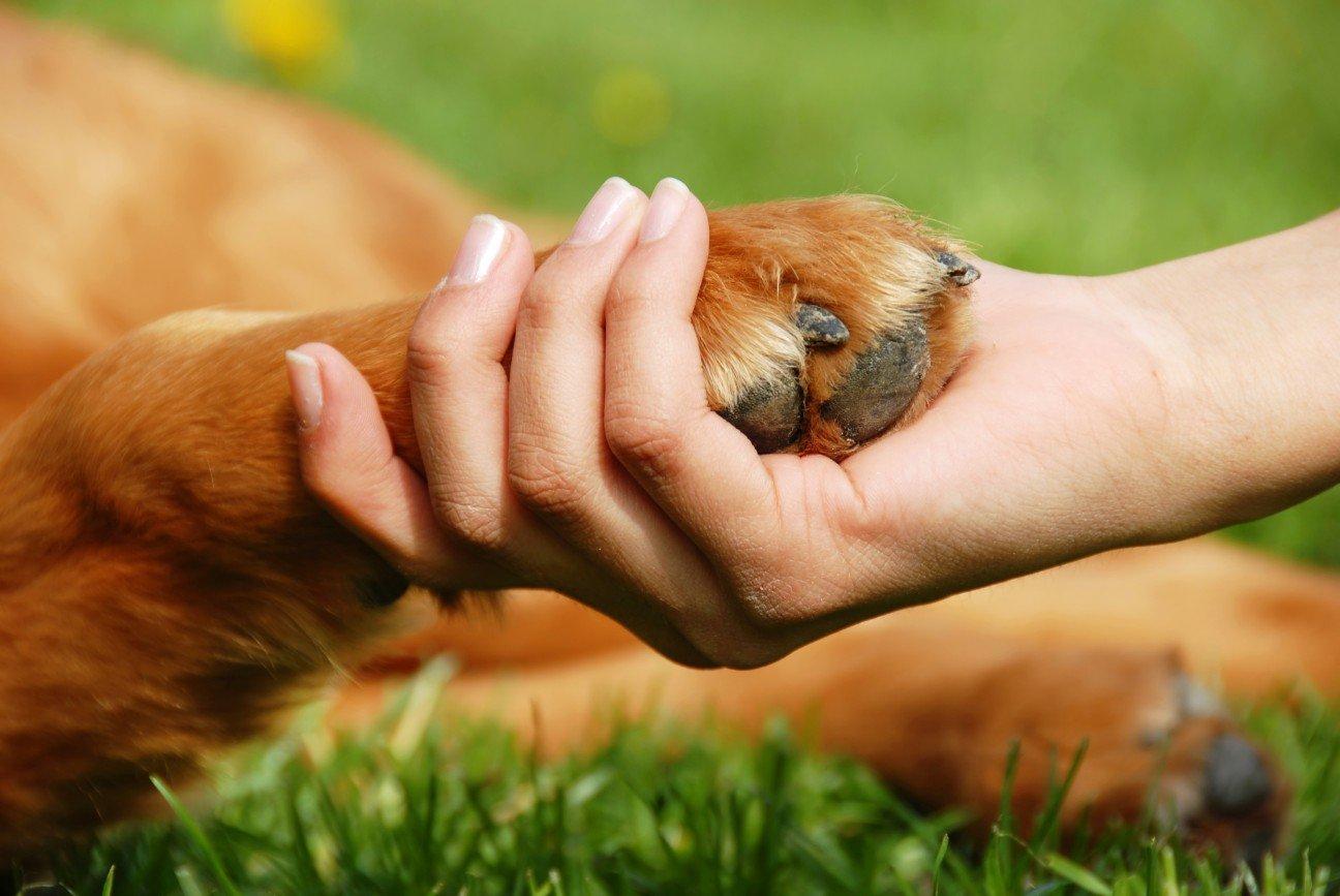 Список гипоаллергенных собак