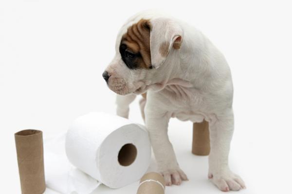 Как приучить щенка к улице?