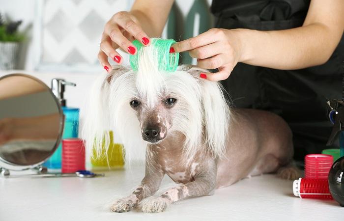 Груминг собак - дома или в салоне?