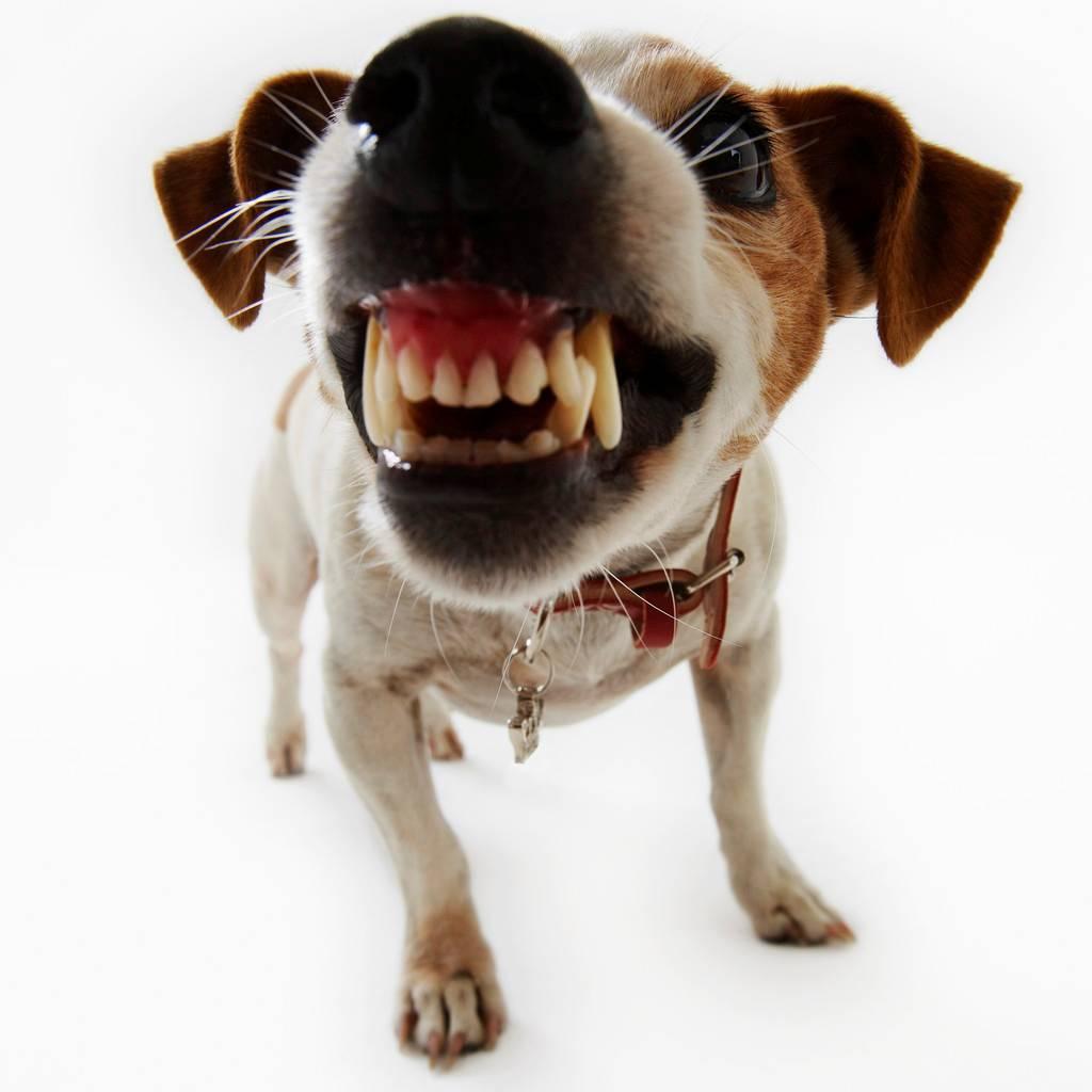 Намордники для собак: какие бывают и как выбрать