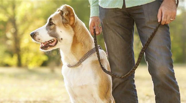 Поводки для собак: необходимый аксессуар для вашего питомца