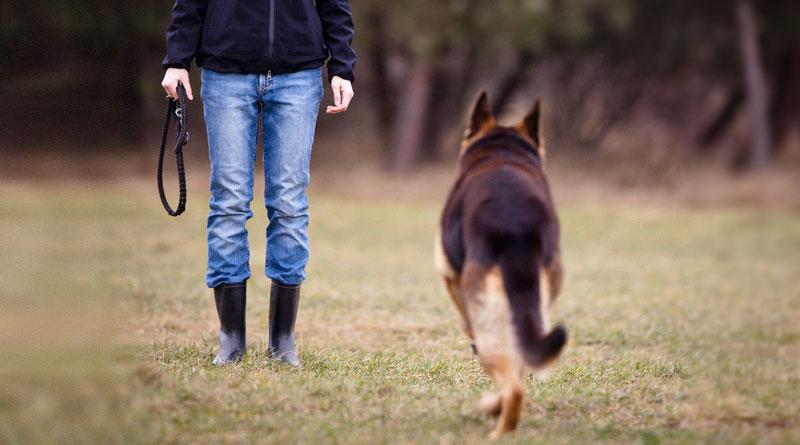 Как научить щенка и собаку команде Ко мне?