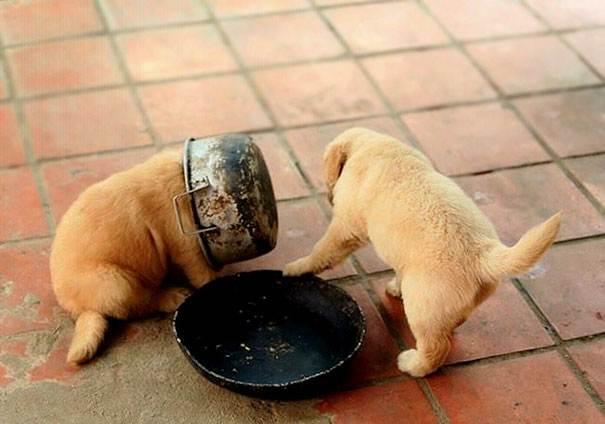 10-топ неловких моментов с собаками