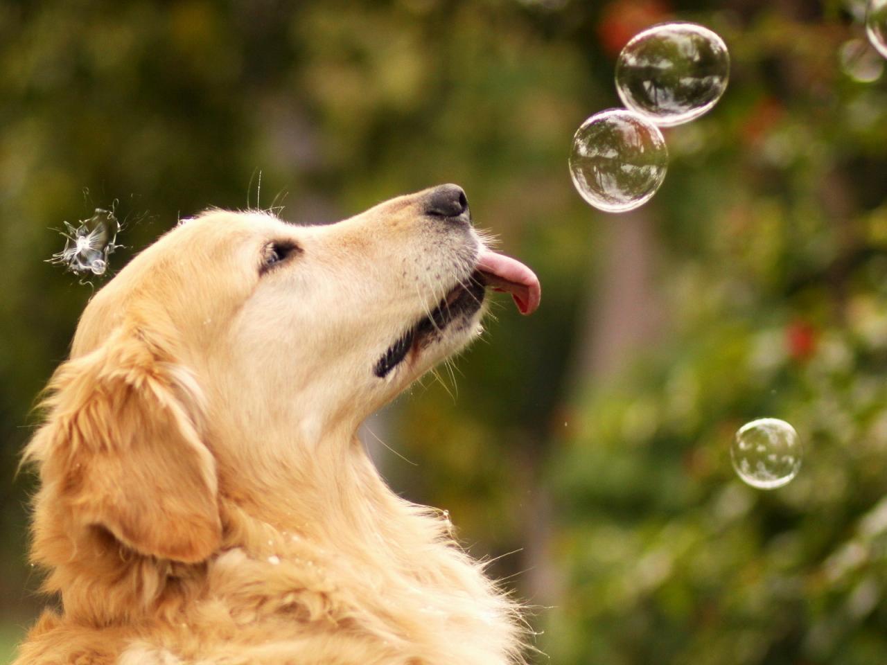 Собаки и мыльные пузыри
