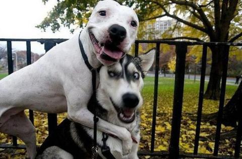 Собак плющит