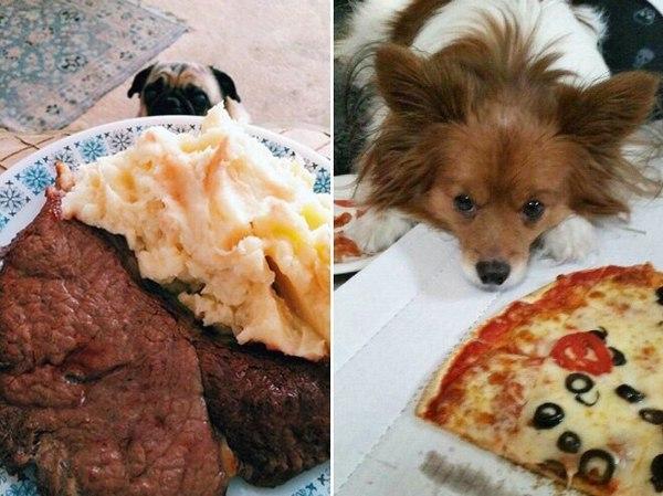 Собаки и еда