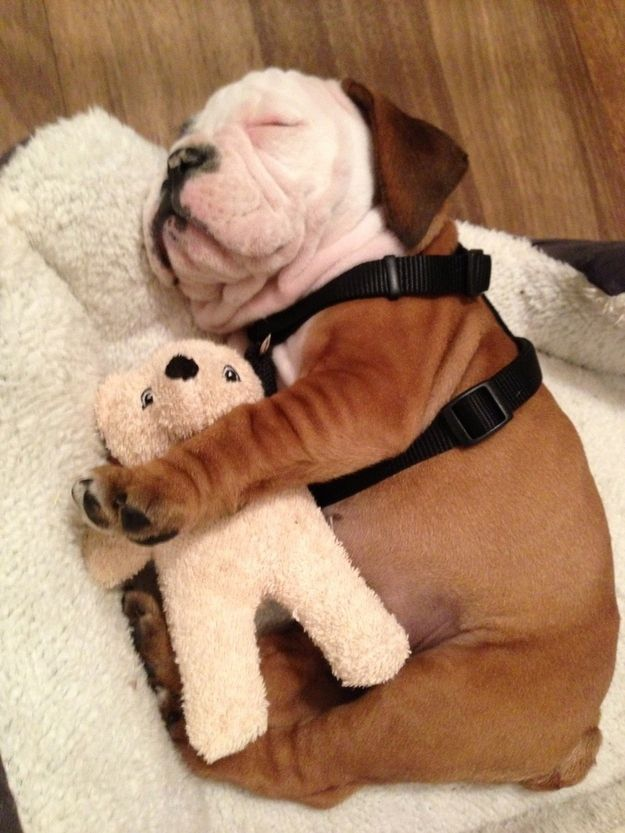 Собаки в обнимку с игрушками