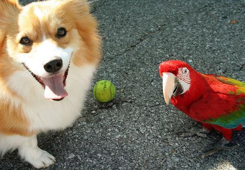 Собака и попугай
