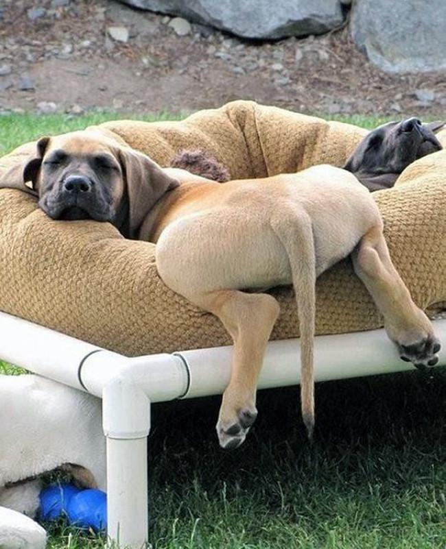 Уставшие собаки