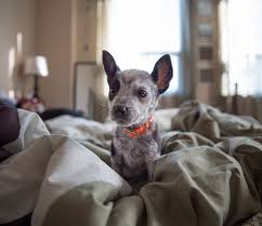 Доброе собачье утро