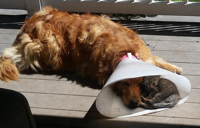 Дружба собак и котов