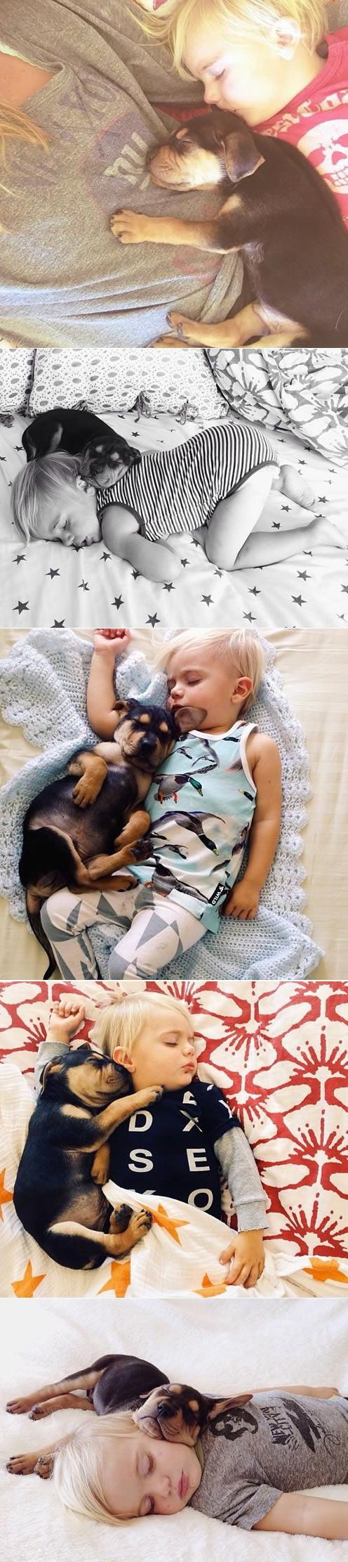 Собака и ребенок спят