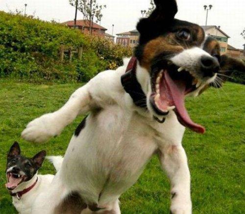Улётные собаки