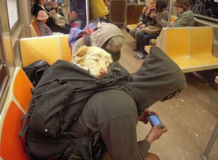 Собаки в рюкзаке