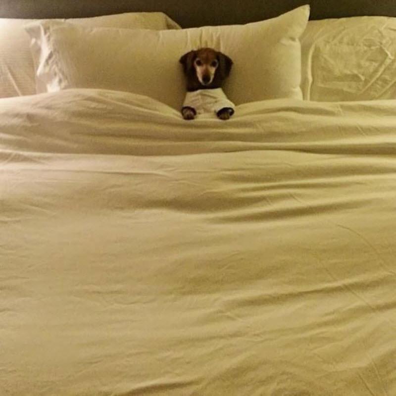 Вельш корги: подборка очаровательных собак