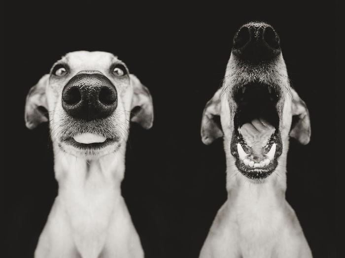 Черно-белые фото собак