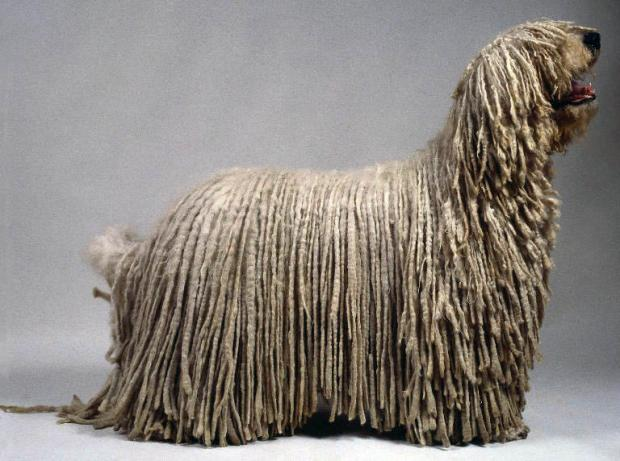 Необычные собаки