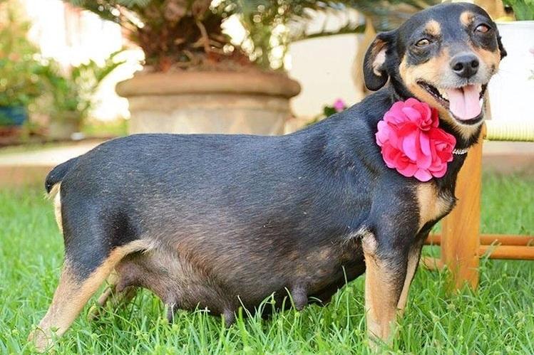 Беременность собаки: что нужно знать хозяину?