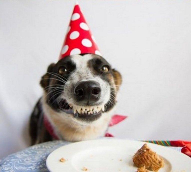 Как четвероногие друзья отмечают день рождения?