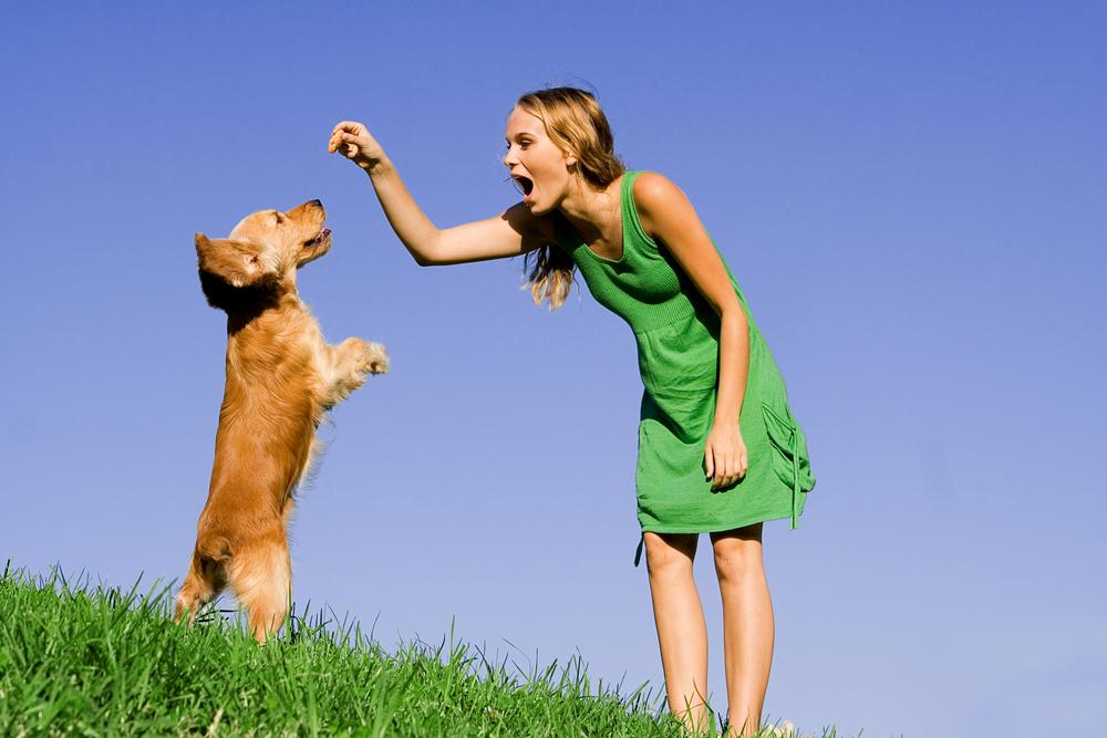 Способы дрессировки собак
