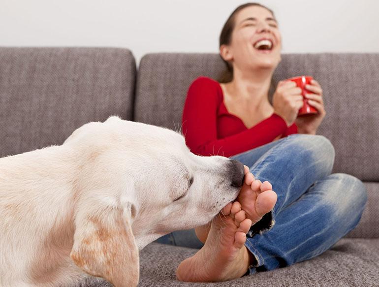 Собаки-облизаки