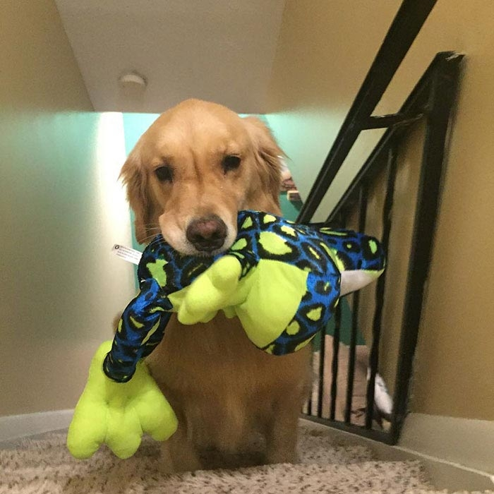 Мохито и ее игрушки