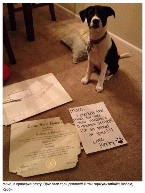 Собаки заслуживают любви