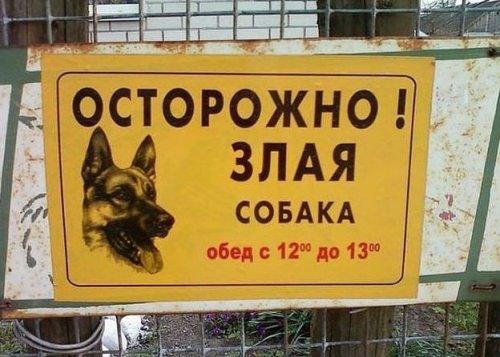 Собачьи таблички