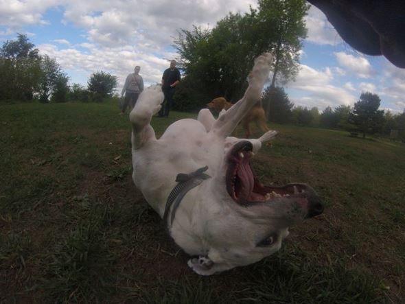 Собака-фотограф Тула