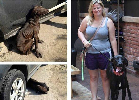 Собаки-найденыши