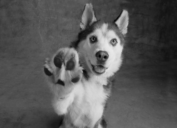 Собачий привет