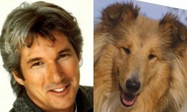 Собаки - двойники знаменитостей
