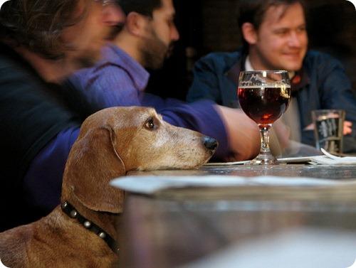 Собаки-алкоголики