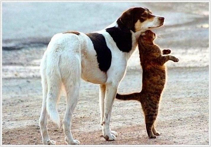Смешные собаки
