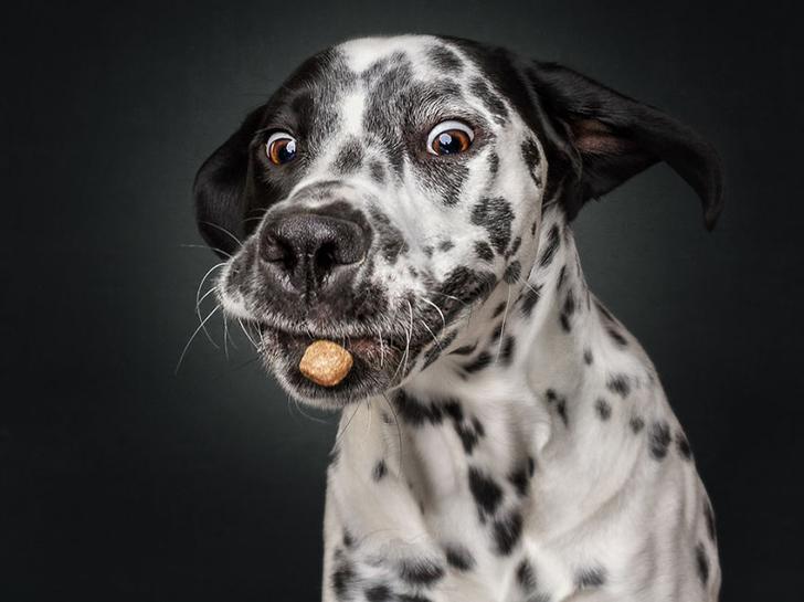 Собаки ловят вкусняшку