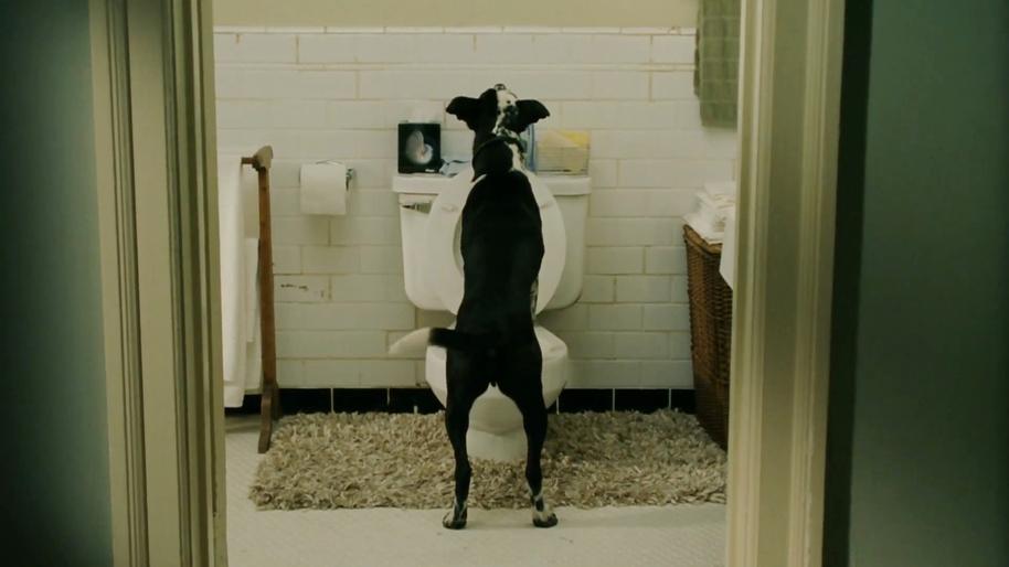 Собаки на унитазе