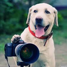 Собака с фотоаппаратом